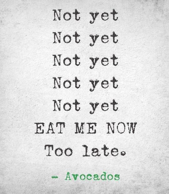 funny-Avocado-eat-now-quote